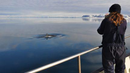 fotoreis spitsbergen zeilen zeilreis