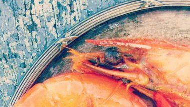 Kulinarne wycieczki żeglarskie