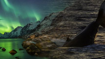 zeilen noorwegen lofoten noorderlicht