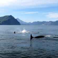 Hvalsafari i norge sejler